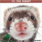 artlist THE FERRET 2017フェレットカレンダー カレンダー/フェレット/カレンダー2017/壁掛け/雑貨/グッズ