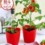 ショッピングハート ハートの実がなる ハートトマト 栽培セット