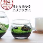 新聖陶芸 育てる水草 S GD-812