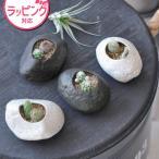 PLANTS ROCK プランツロック カクタスSEISHIN聖新陶芸GD-807