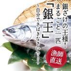 Yahoo!フィッシャーマンジャパン銀鮭の王様、「銀王」まるごと 一匹自分でさばきなさいっ!