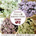 バラ50本のおまかせマルシェ便 お得な切り花