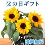 あすつく \遅れてごめんね/ 父の日 2021 花 プレゼント 選べる花鉢 ひまわり or 黄色バラ 鉢植え ギフト 父の日シンボルフラワー FKPP