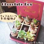 多肉チョコレートボックス チョコみたいな多肉植物セット チョコの香りのするキャンドル付き