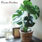 観葉植物 モンステラ + 丸バナナカゴ 茶色