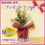 観葉植物・花鉢 ラッピング Mサイズ 商品と一緒にカートへお入れ下さい