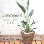 ストレリチア レギネ 選べるバナナカゴ 鉢植え 観葉植物 即日発送のインテリアグリーン