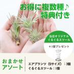 エアプランツ アソート3個(Sサイズ)&スツール1個セット/ 観葉植物 チランジア エアープランツ