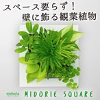 【midorie】ミドリエ スクエアフレーム/全6色5タイプ  【壁掛け観葉植物】【ギフト/プレゼント】