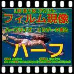 ハーフ フィルム現像 + プリント + CD書込 + ネガインデックス + CDインデックス