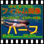 ハーフ フィルム現像 + プリント + CD書込16B + ネガインデックス + CDインデックス