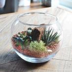 サボテン寄せ植え ガラス容器 恐竜フィギュア付き