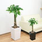 観葉植物 編み込みパキラ スクエア陶器鉢植え 8号サイズ