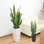 観葉植物 サンスベリア・ローレンティ おしゃれ お祝い 大型 陶器鉢植え