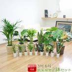 選べる観葉植物2鉢セット 6号3号 鉢カバー付き(6号のみ) おしゃれ お祝い