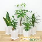 観葉植物 3号スクエア陶器鉢植え 3鉢セット おしゃれ お祝い