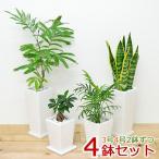 観葉植物 3号 4号 スクエア陶器鉢植え 4鉢セット おしゃれ お祝い