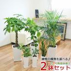 観葉植物 7号4号 2鉢セット 陶器鉢植え 選べる品種 おしゃれ お祝い