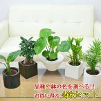 ミニ観葉植物 ハイドロカルチャースタイリッシュ陶器鉢付き 4鉢セット