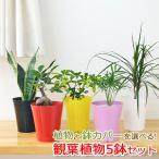 選べる観葉植物 5鉢セット 鉢カバー付き