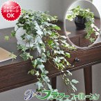 観葉植物 アイビー(ヘデラ)ロング おしゃれ お祝い ボール形陶器鉢植え