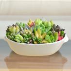 多肉植物寄せ植え 皿型陶器鉢