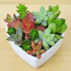多肉植物寄せ植え ハート型ホワイト陶器鉢