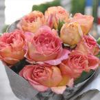 予約販売 バラ大苗 デルバール ラ パリジェンヌ  四季咲き 薔薇 バラ バラ苗 hao 12月上旬以降発送
