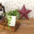 ディスキディア ハートジュエリー(観葉植物 10.5cmポット)