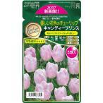 予約販売9月以降発送 球根 優しい花色のチューリップ キャンディープリンス5球