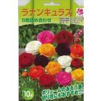 予約販売9月以降発送 花の大和 球根 ラナンキュラス5色詰め合わせ10球セット