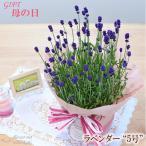 まだまだ間に合う母の日 ギフト ラベンダー 母の日 贈り物 プレゼント 花 鉢植え 5号鉢 送料無料 母の日2021