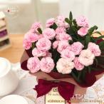 母の日 ギフト カーネーション バンビーノ 4号鉢 送料無料 贈り物 プレゼント 花 鉢植え 母の日2021