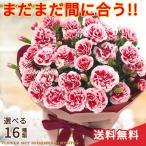 まだまだ間に合う母の日 ギフト 選べるカーネーション 16色 5号鉢 送料無料 贈り物 プレゼント カーネーション 花 鉢植え 鉢花 母の日2021