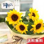 父の日ギフト ヒマワリ 鉢植え 5号鉢 ひまわり 向日葵 送料無料 ギフト 贈り物 プレゼント