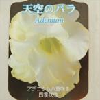 多肉植物 caコーデックス 八重咲きアデニウム パームサップ 4号鉢 多肉植物 塊根植物 コーデックス 天空のバラ