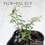 フィンガーライム ピンク 9cmポット フィンガーライム 苗 キャビアライム 果樹 柑橘類 希少種