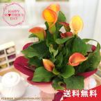 まだまだ間に合う母の日 ギフト カラー オレンジ 母の日 贈り物 プレゼント 花 鉢植え 5号鉢 送料無料 母の日2021