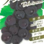 ブドウ タカツマ ぶどう苗 葡萄 果樹苗 10.5cmポット