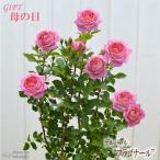 母の日 ギフト バラ デルバール フラゴナール 贈り物 プレゼント バラ 薔薇 6号鉢 送料無料 花 鉢植え