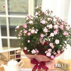 早割 母の日 ギフト つるバラ 舞姫 リング 5号鉢 送料無料 贈り物 プレゼント 薔薇 バラ 花 鉢植え 母の日2021