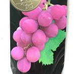 ブドウ キタサキレッド ぶどう苗 葡萄 果樹苗 10.5cmポット