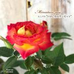 予約販売 ミニバラ トロピカルサンセット 3号ポット バラ 薔薇 バラ苗 苗 bry 10月下旬以降発送