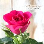 予約販売 ミニバラ ブルート 3号ポット バラ 薔薇 バラ苗 苗 bry 10月下旬以降発送