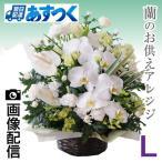 花 お供え 花 喪中 蘭のお供え花アレンジメント Lサイズ 祥月命日 年忌法要 一周忌 喪中はがき 届いたら