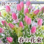 バレンタイン 花 チューリップの花束 2Lサイズ ギフト フラワーバレンタイン
