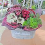 お中元 誕生日の花 ワインと花 セット 観葉植物 寄せ鉢 お花のギフト バスケット  翌日配達