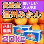 南柑20号 温州 みかん 20kg 愛媛県産 送料無料 規格外 訳あり 安い 自宅用