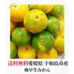 極早生 みかん 10kg 送料無料 愛媛県産 規格外 訳あり 安い 自宅用