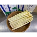 蘆筍 - 【送料無料】優品/北海道名寄産グリーンアスパラ 2kg M〜2Lサイズ
